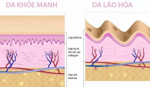 Mặt nạ ngủ giúp tăng khả năng tổng hợp collagen lên gấp đôi