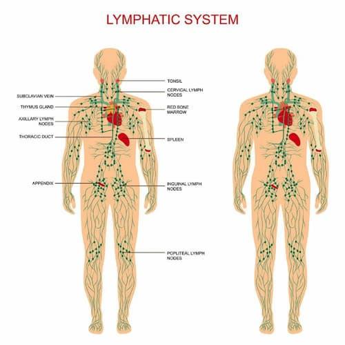 Hệ bạch huyết
