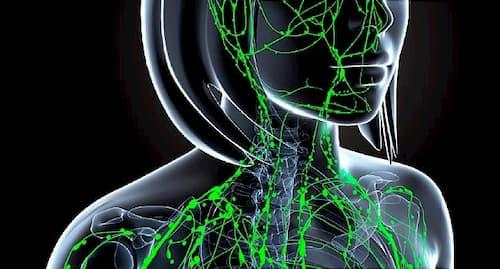 Vai trò của hệ bạch huyết với sức khỏe và làn da