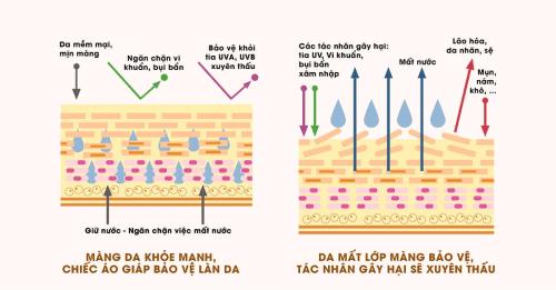 Lớp màng hydro-lipid