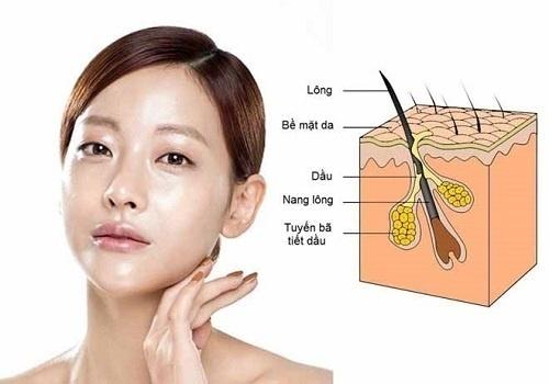 Cấu trúc của da