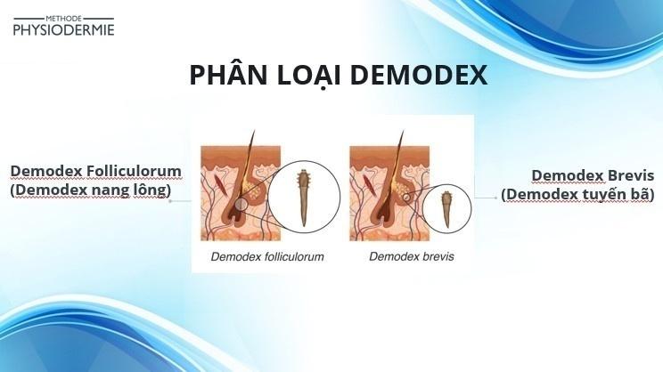 Phân loại demodex